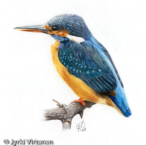 Kingfisher (2003)