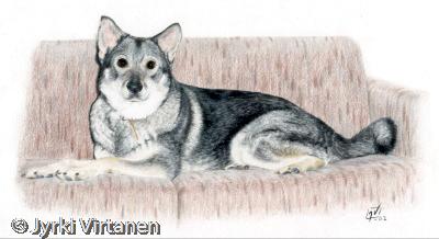 Jasu (2002) - Swedish Elkhound
