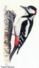 Woodpecker (2003)