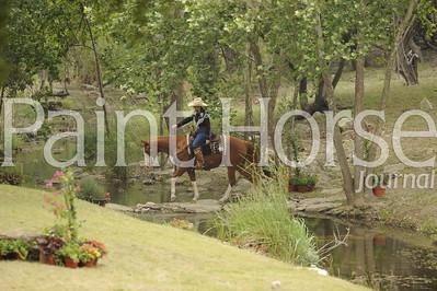 2011 America's Fav Trail Horse
