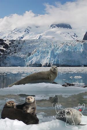 Collage, Alaskan Animals, Alaskan, Animals, Animal Collage, seal, harbor seal, bear, moose, puffin