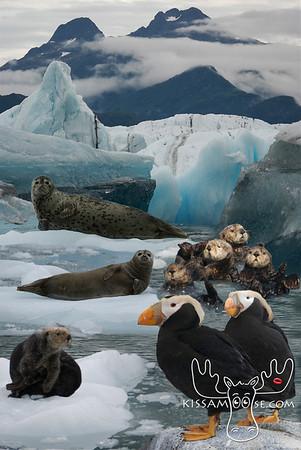 Collage, Alaskan Animals, Alaskan, Animals, Animal Collage, seal, harbor seal, bear, moose, puffin, alaska