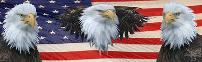 bald eagle, american, flag, collage