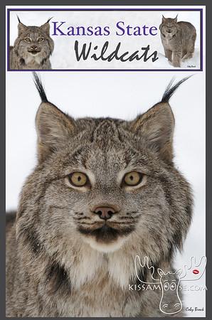 kansas state, wildcats, lynx, wildcat, kansas,k-state wildcats, k-state