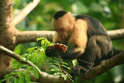 Costa Rica Images