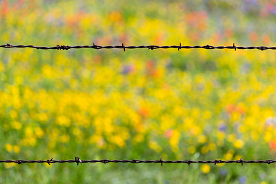Spring, Texas Style