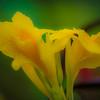 The Yellow Paint Brush