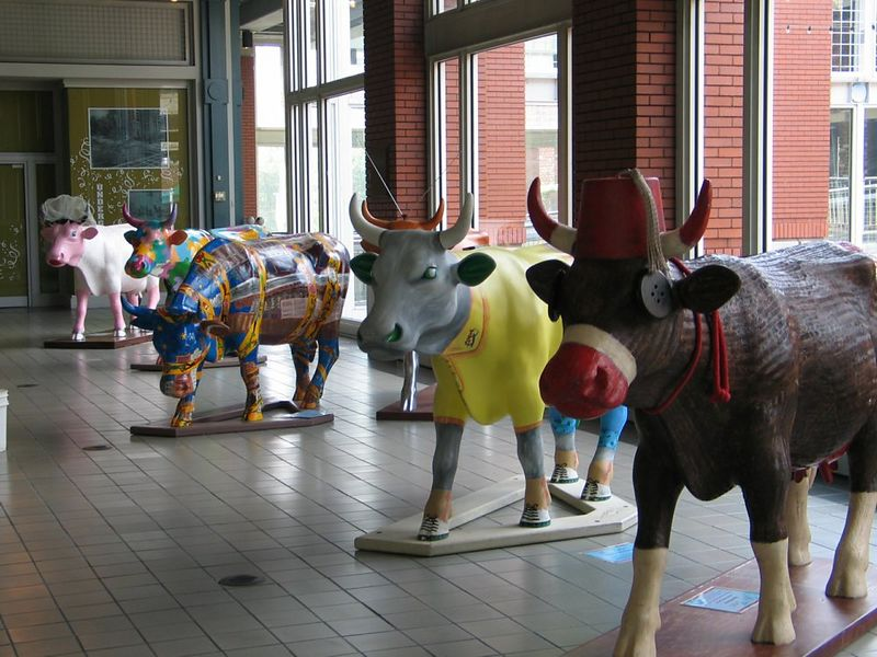 cow-02