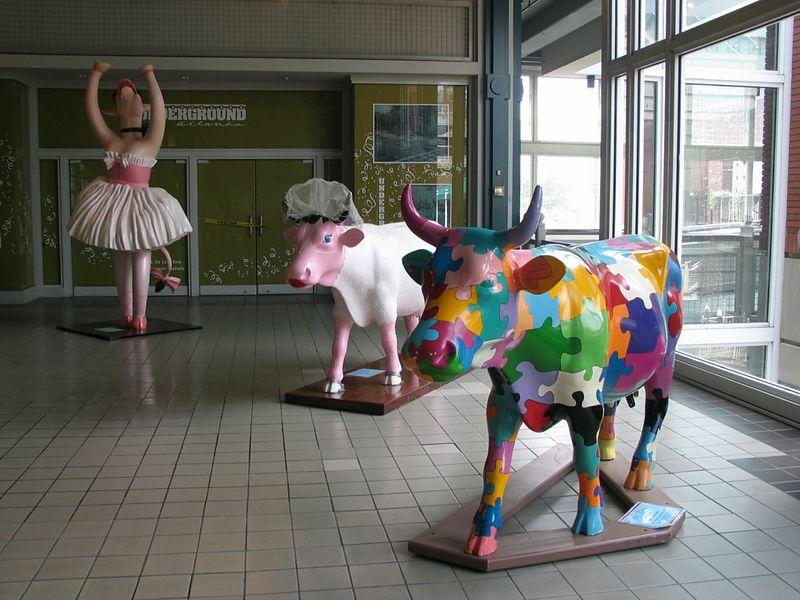 cow-03