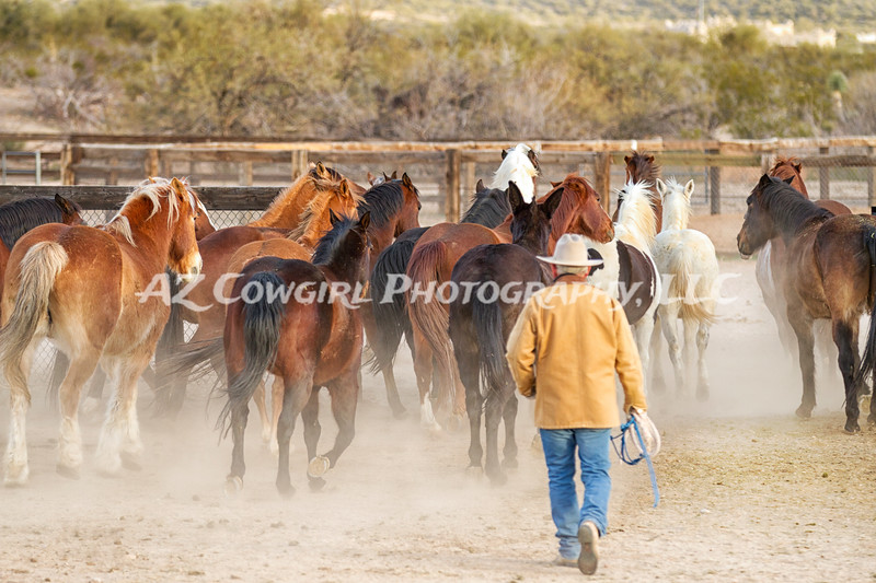 Moving The Herd