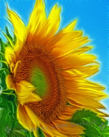 Sunflower Daze ~ An alternate version of the large sunflower.