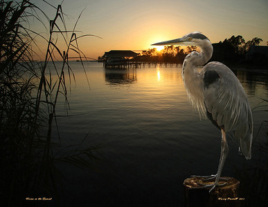 """Heron at Sunset"""