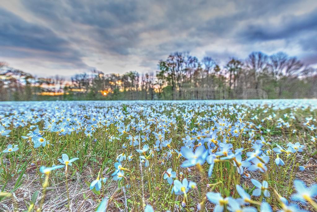 Field of Flowers_GTL 2