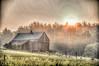 Sunny Barn