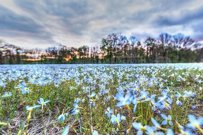 Field of Flowers_GTL