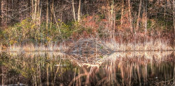 Beaver Dam-14_GTL