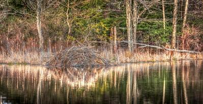 Beaver Dam-13_GTL