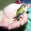 Hummingbird Rehab