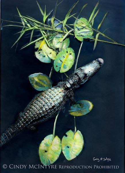 Gator - Florida Everglades alligator