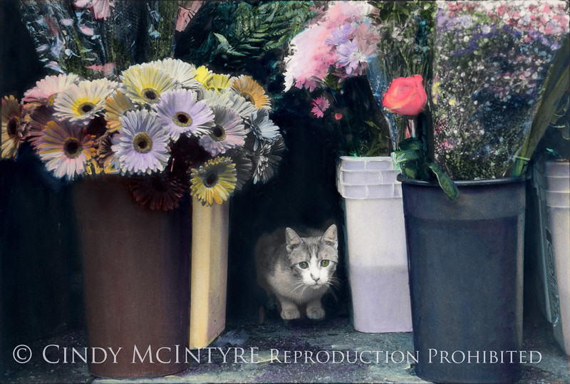 Flower Child - kitty outside flower shop in Manhattan - photograph by Ryan McIntyre (age 11), coloring by Cindy McIntyre