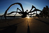 """Crouching Spider"" installation in San Francisco, CA,  by the San Francisco Arts Commission, 2007 to early 2009.  Artist Louise Bourgeois, born in Paris, Dec 11, 1911, died in New York, May 31, 2010."