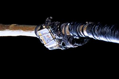 Custom Cue Stick