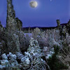 full moon on shoretif