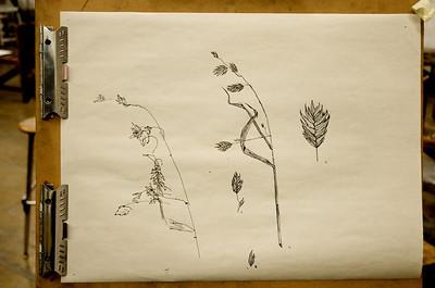 Nature Contour Line Drawings - Fine Sharpie on Newsprint