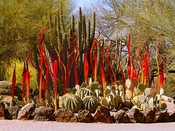 Dale Chihuly: The Nature of Glass - Desert Botanical Gardens/Phoenix AZ