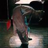 Ballet #81