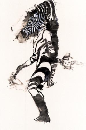 Southern Cape Zebra - Study