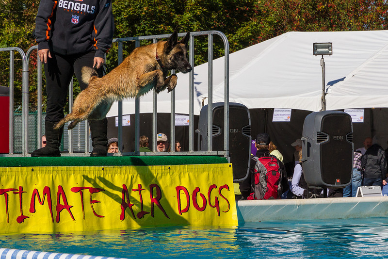 Dog jumping contest at the Midwest Outdoor Experience at Eastwood Metropark