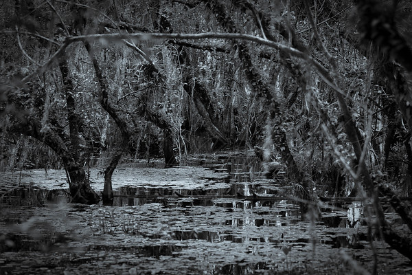 Big Cypress National Forest-1