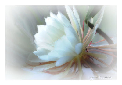 Moon Flower copyrighted Joyce Marie Martin©