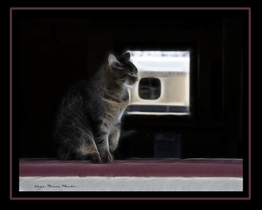 Digital Art Barn Cat Image and Art is copyrighted by Joyce Marie Martin©