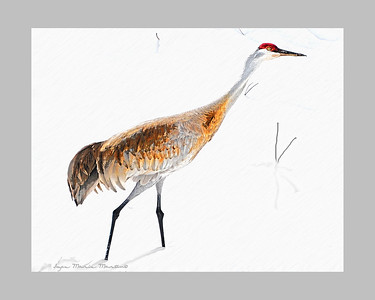 Alaskan Crane Image and Artwork by Joyce Marie Martin at JAG Creations. Copyrighted material.  Do not use without written consent by Joyce Marie Martin.