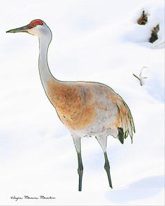 Sand Crane