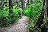 Rainforest Sitka Alaska