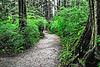 Rainforest Sitka Alaska