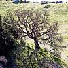 Hillside Oak Artesa Winery