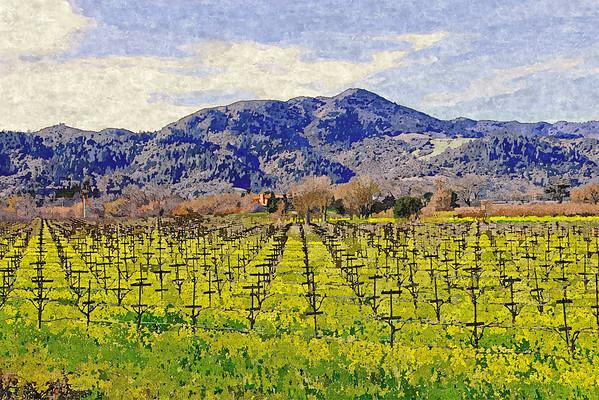 napa valley vinyard view