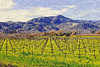napa valley vinyard view
