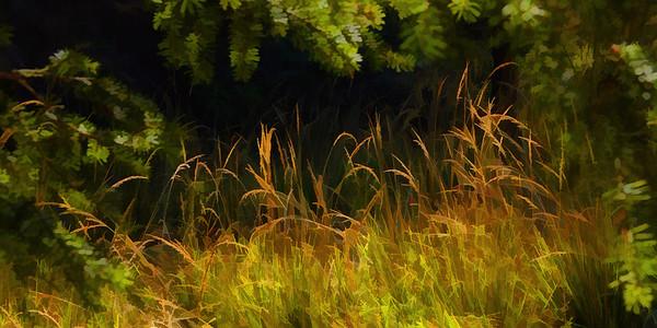 Graceful Grass