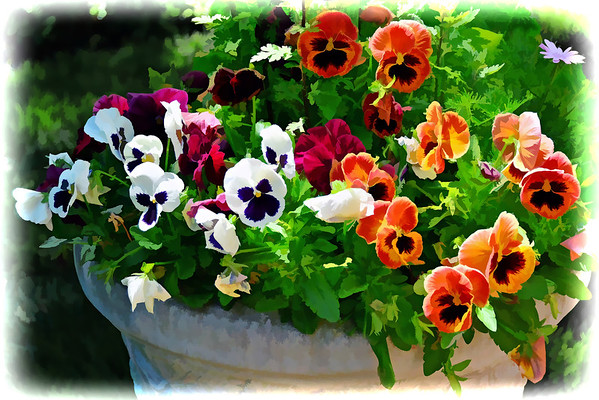 pansy's in a pot
