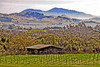 Valley View, Napa CA
