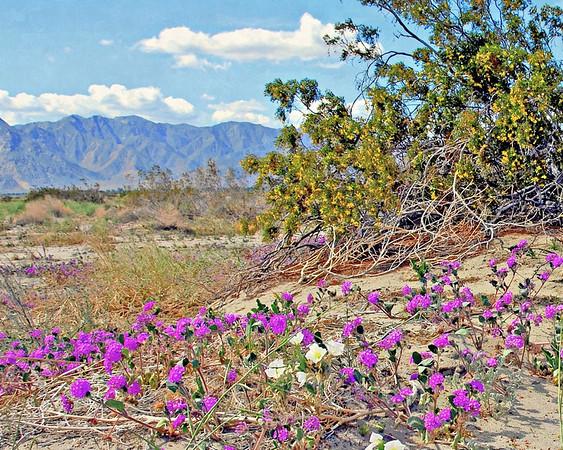 Anza Borrego Desert, 2008