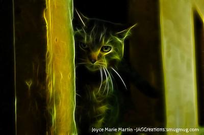 Barn Cat 3