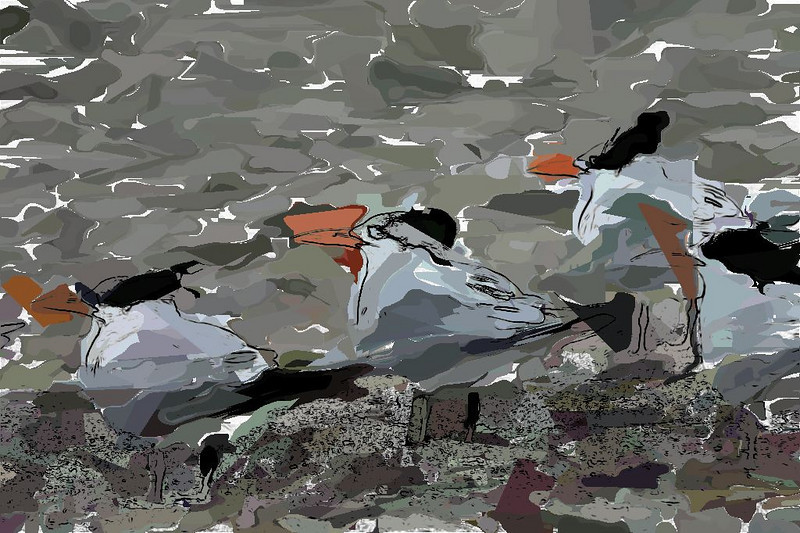Royal Terns_189104