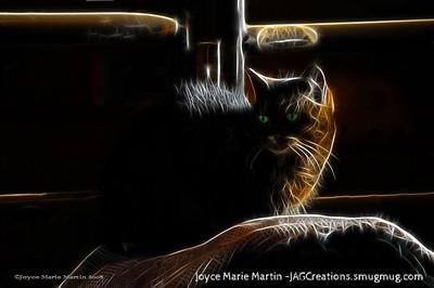 Waiting Barn Cat