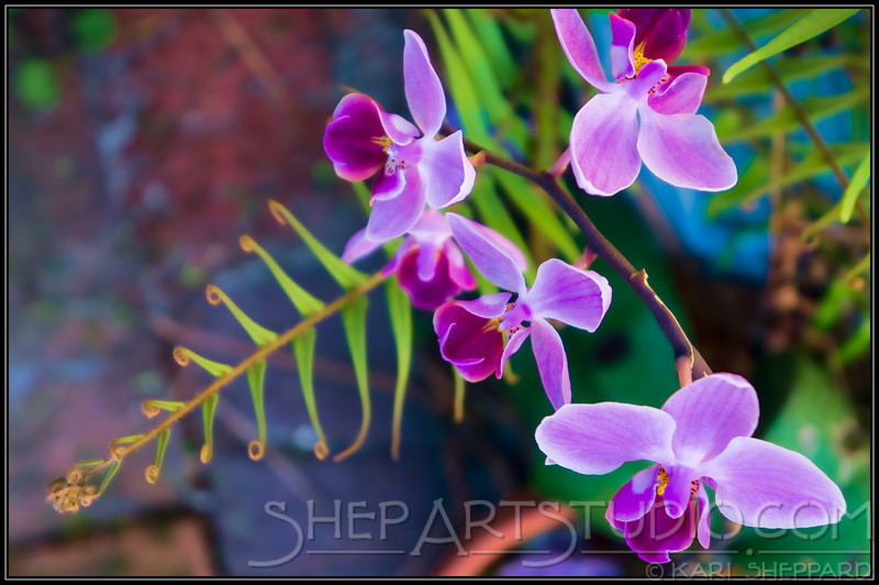 Orchid with fern